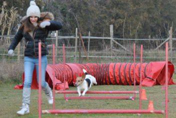 Suivi Bamboo - Ecole Canine du Luberon