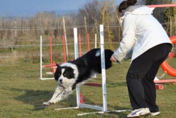 Suivi Cooper - Ecole Canine du Luberon