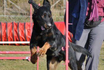 Suivi Farouk - Ecole Canine du Luberon