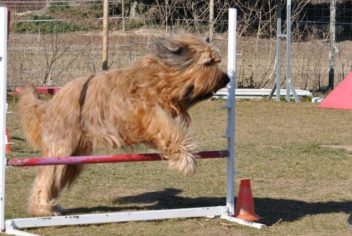 Suivi Feebe - Ecole Canine du Luberon
