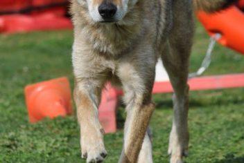 Suivi Furios - Ecole Canine du Luberon