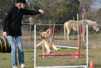 Agility loisir - Ecole Canine du Luberon