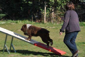 Suivi Hiphop - Ecole Canine du Luberon