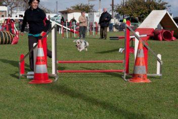 Christine en concours (Agility) - Ecole Canine du Luberon