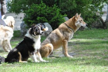 Démonstration Juin 2013 - Ecole Canine du Luberon
