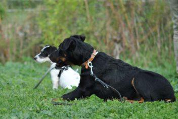 Ecole du chiot - Ecole Canine du Luberon