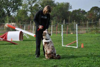L'école du chiot - Ecole Canine du Luberon