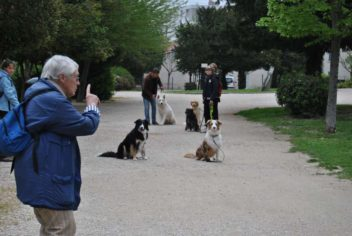 Accueil - Ecole Canine du Luberon