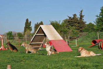 Obéissance canine - Ecole Canine du Luberon