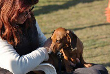 Pause tendresse - Ecole Canine du Luberon
