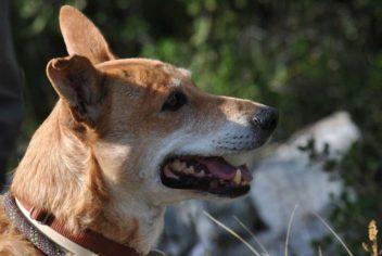 Randonnée du 09 Octobre 2011 - Ecole Canine du Luberon