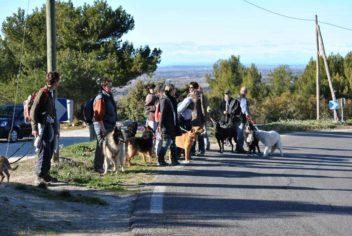 Randonnées canines - Ecole Canine du Luberon