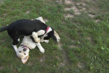 Récréation - Ecole Canine du Luberon
