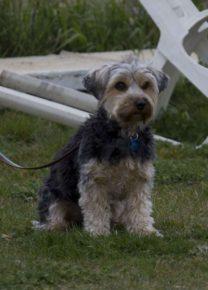 Les chiens de l'école - Ecole Canine du Luberon