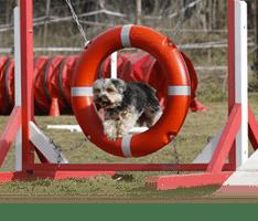 dressage chien robion